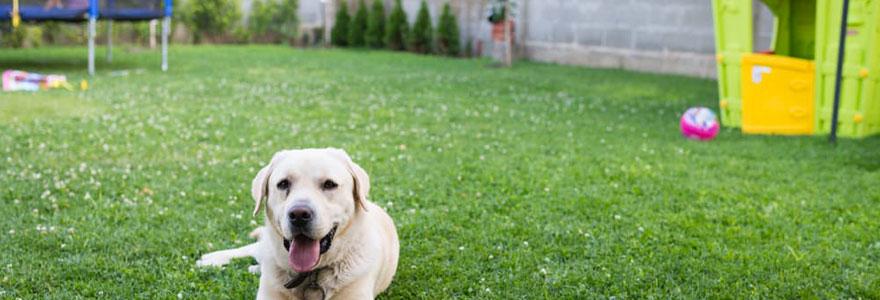 dangers du jardin pour votre chien